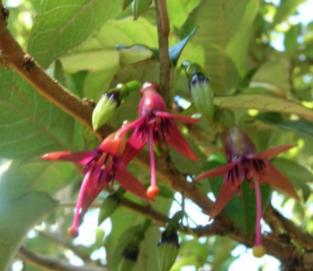 Mou Waho Tree Planting | Eco Wanaka