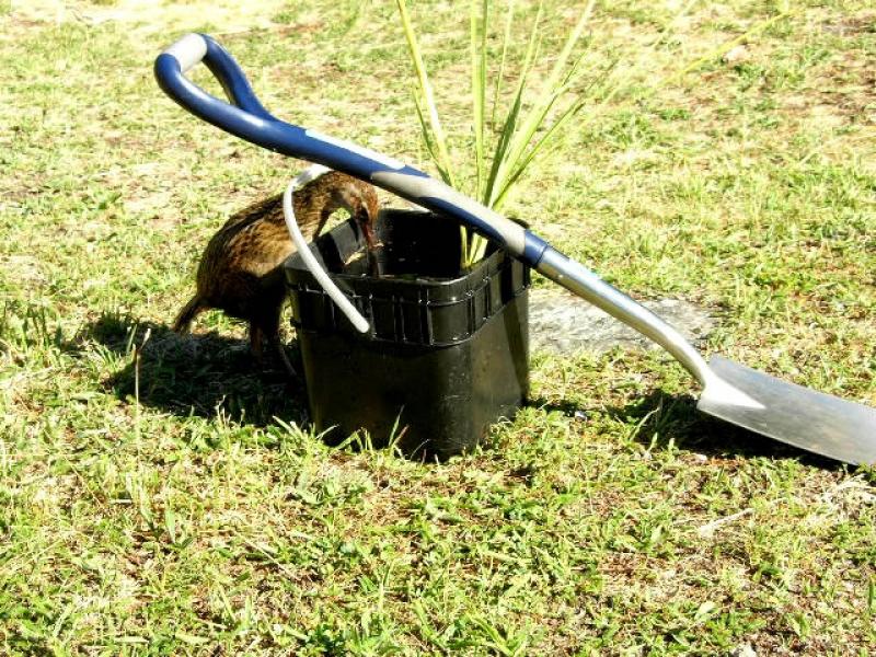 Mou Waho tree planting with Eco Wanaka